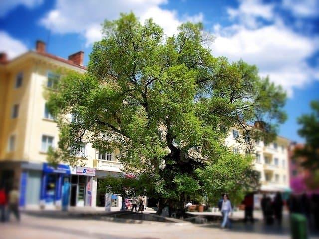 Sliven, Bulgaria: home of the European tree of the year winner 2014 Global Grasshopper