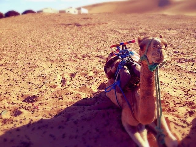 A journey into the Sahara with the Berbers Global Grasshopper