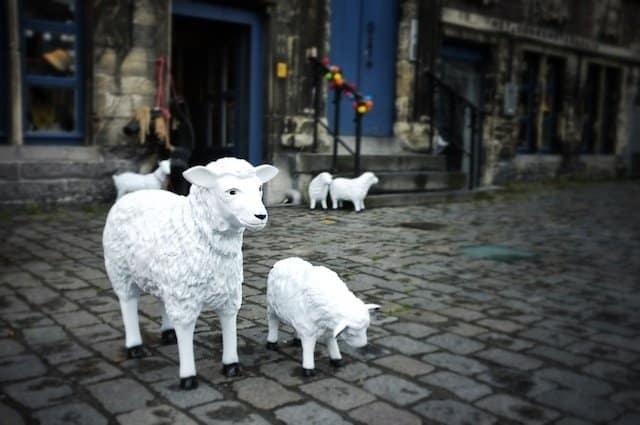 Ghent Culture