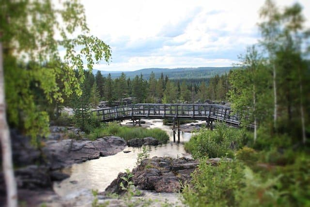 Swedish Lapland – Europe's last wilderness Global Grasshopper