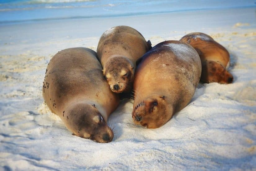 Cute sealions on the beach