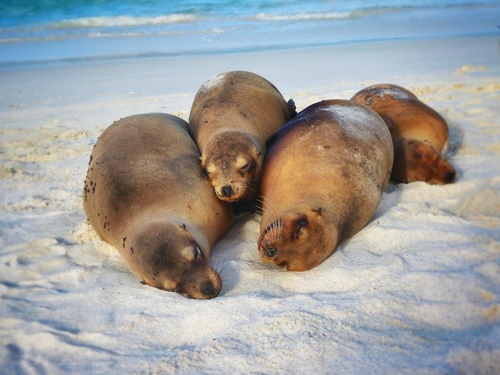 Cute-sealions