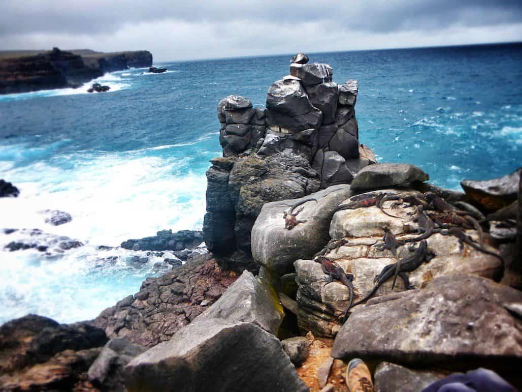 Galapagos iguna rock