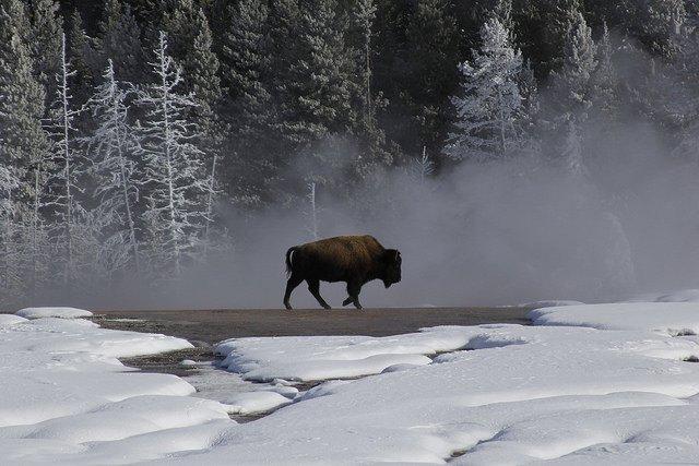 Wyoming winter wildlife