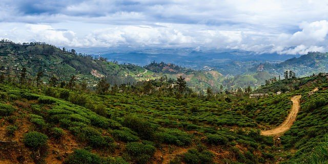 Ceylon tea country