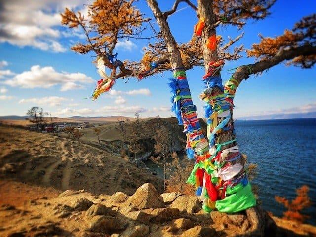 Lake Baikal Tree