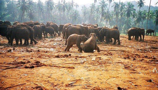 Pinnewela Elephant Orphanage