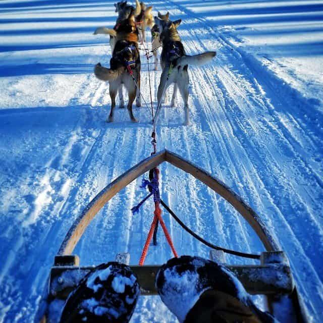 From reindeer to huskies - a stay in Finnish Lapland Global Grasshopper