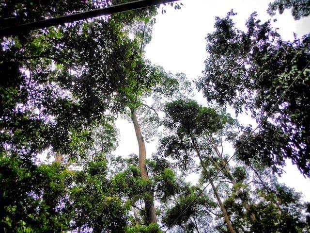 Jungle-640x480