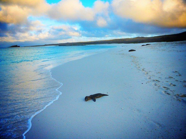 10 reasons why the Galápagos Islands should be at the top of your bucket list Global Grasshopper