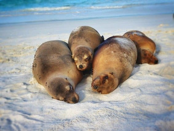 Cute seals on the Galapagos Islands