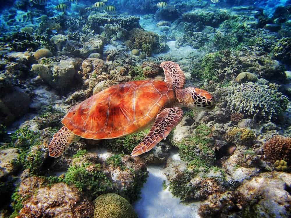 Discovering Grand Cayman in the Caribbean