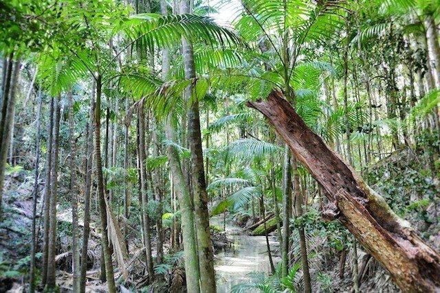 Bush Walk Fraser Island