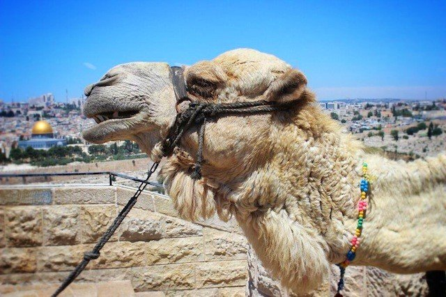 Top 10 intriguing places to see in Israel Global Grasshopper