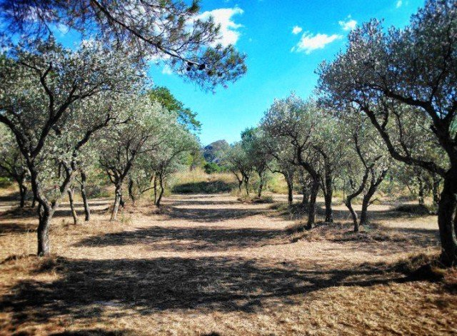 A week in Provence - off the beaten track Global Grasshopper
