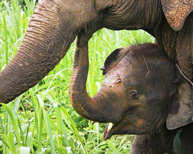 Boon Lott Elephant Foundation