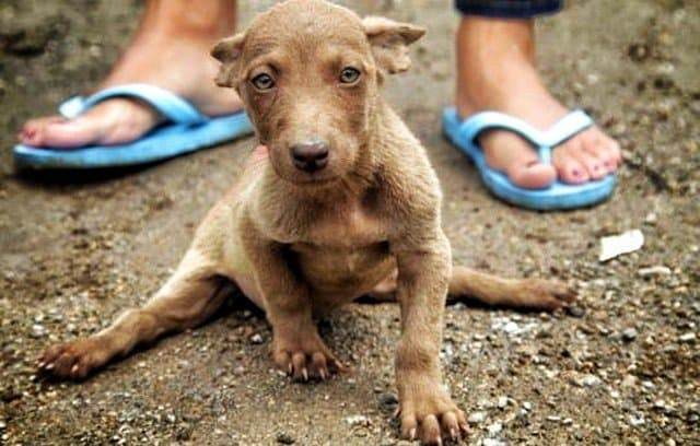 Volunteer Soi Dog Foundation