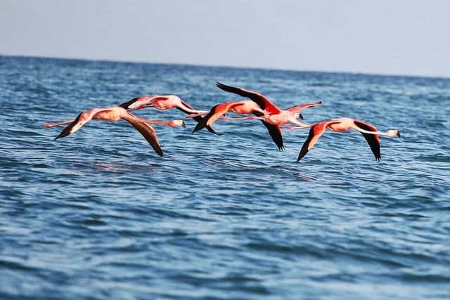 where to find Pink Flamingos Mexico