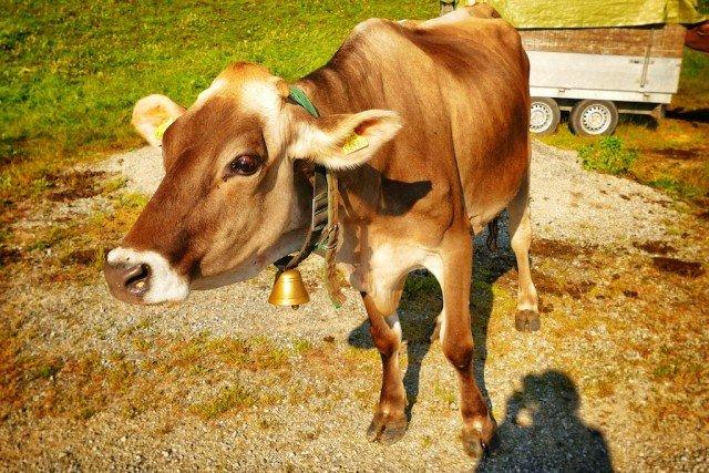 Exploring Austria - culture and nature in affluent Vorarlberg Global Grasshopper