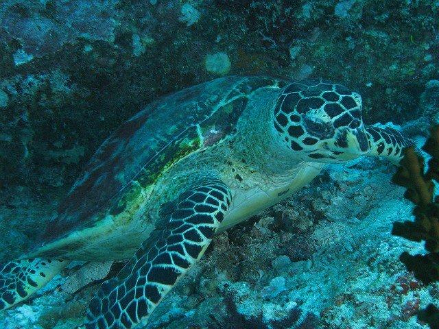 Turtle Thailand