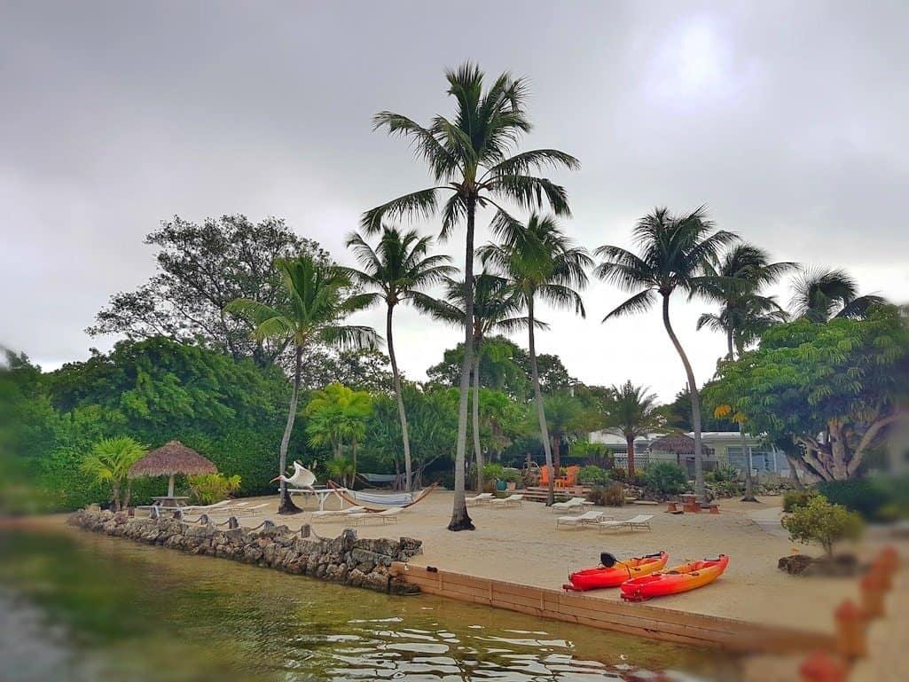 Florida Keys Palm Trees