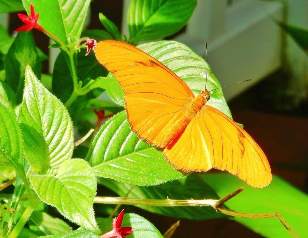 Florida Keys Garden
