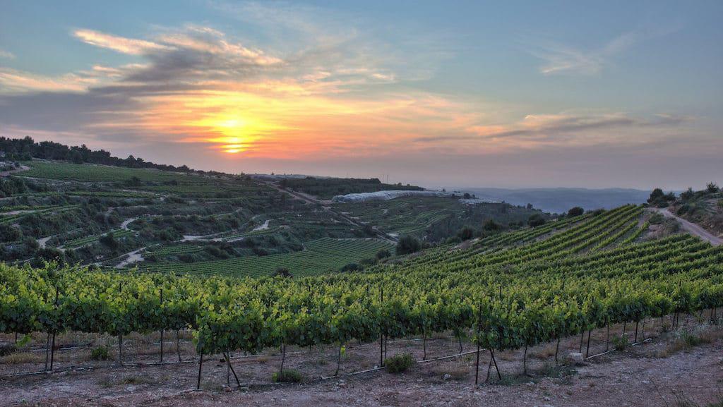 Israel wine growing region