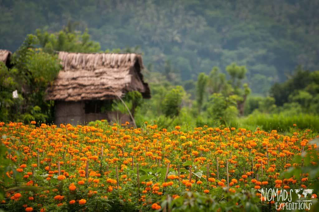 Pretty fields in Bali