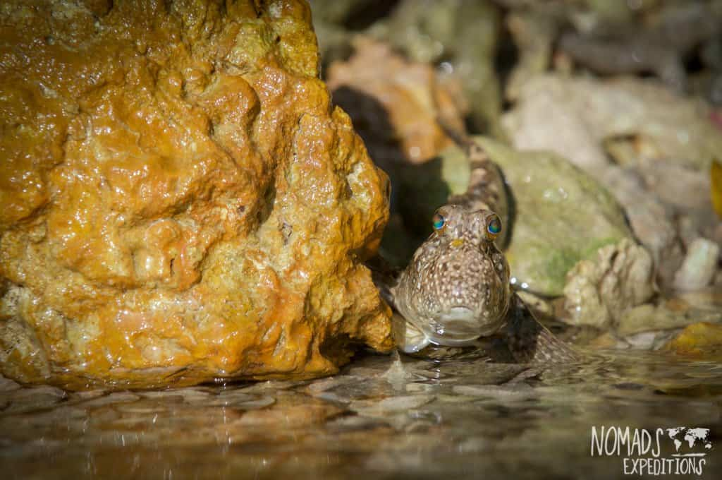 Bali diving photography fish