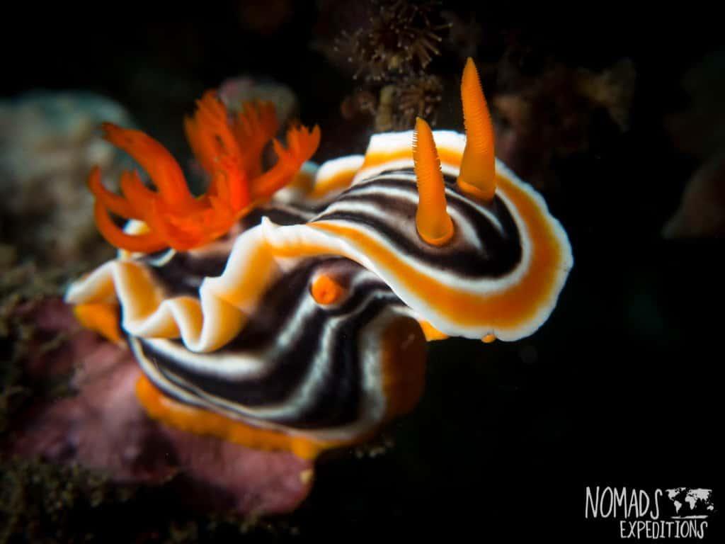 Bali diving photography coral