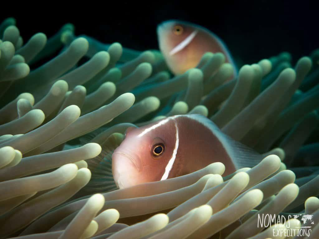 Bali diving photography