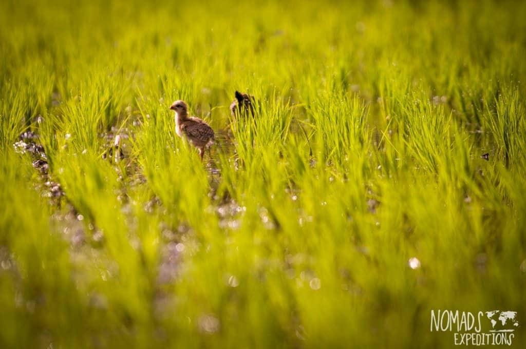 Bali birdlife farm