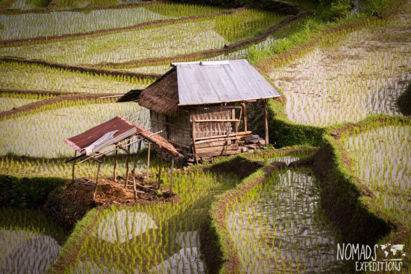 Bali Rice Terrace Horizontal