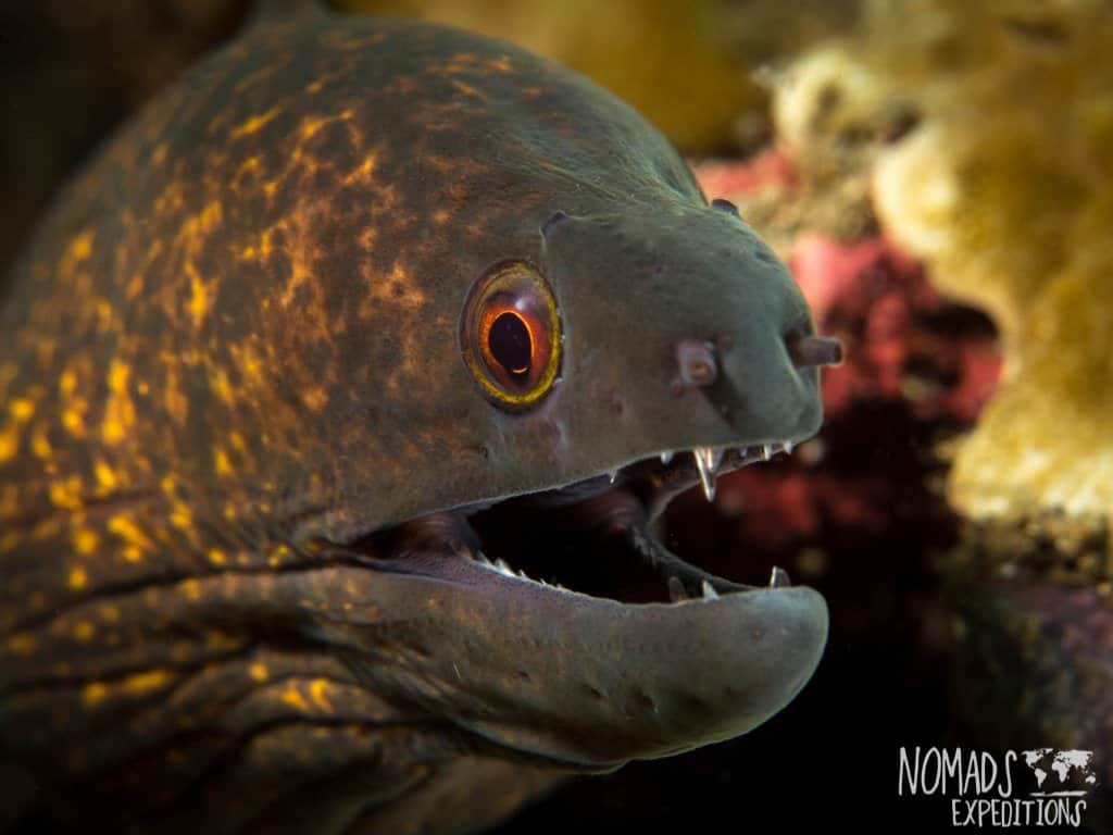 Bali diving photography scary fish