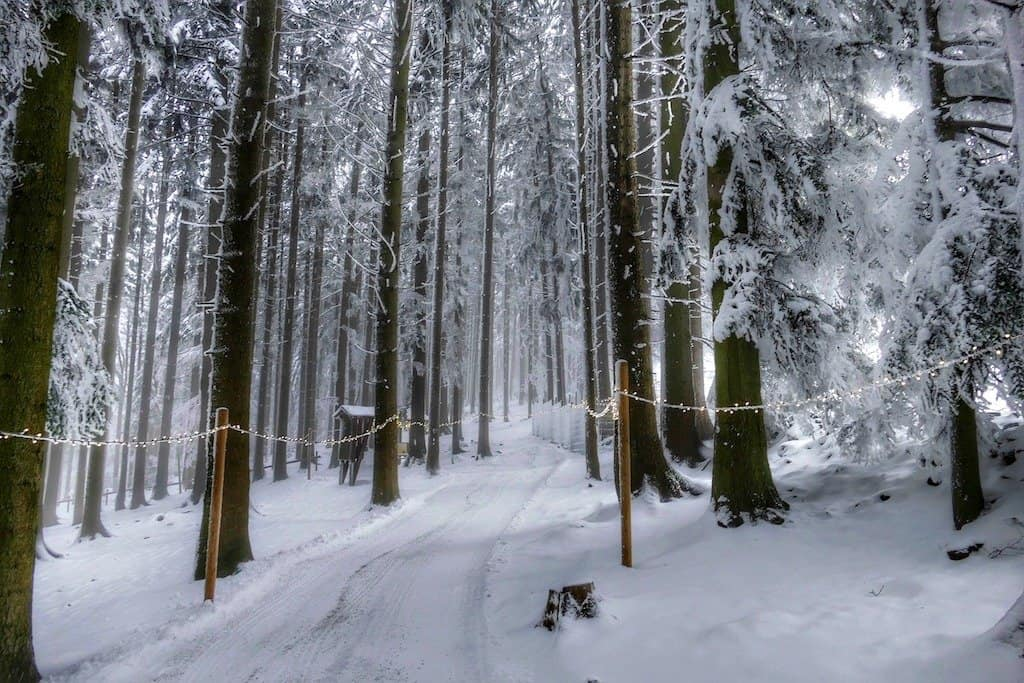 Winter in the the Bavarian Forest