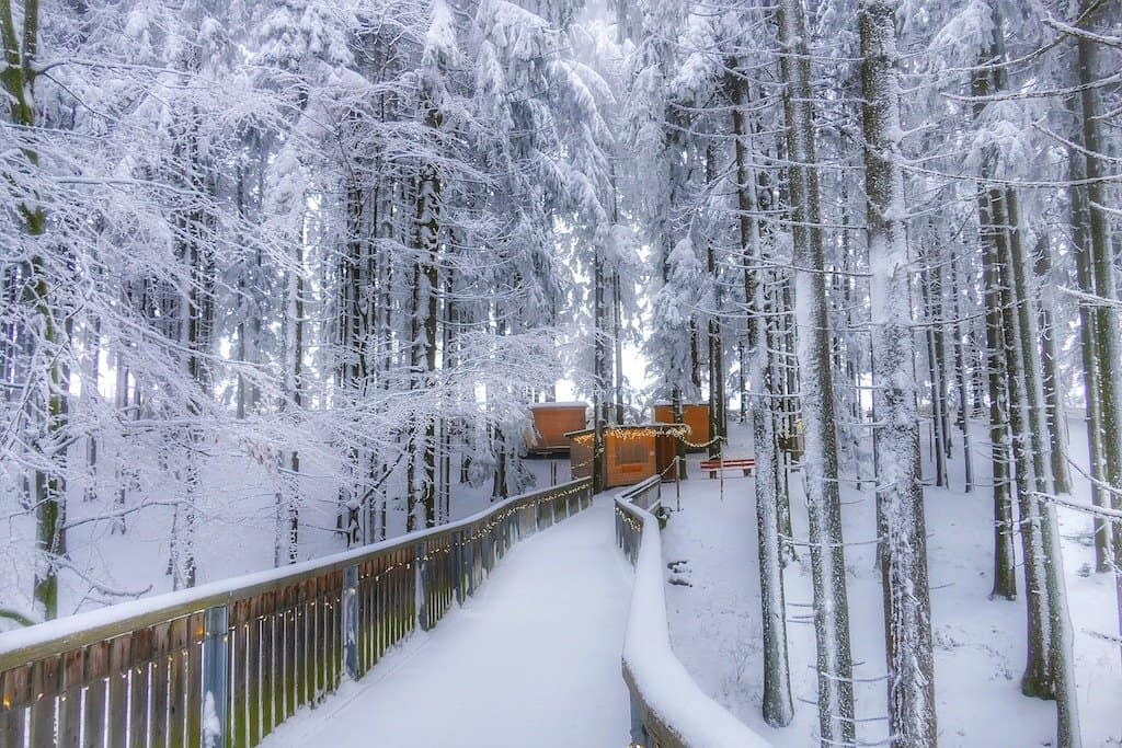 Snow Bavarian Forest