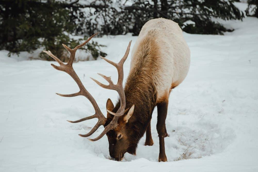 6 life-inspiring winter activities in Jasper and Edmonton, Canada Global Grasshopper