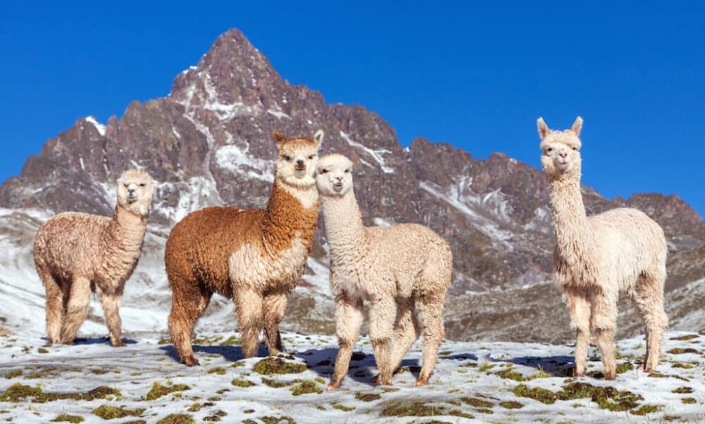 Reasons why you should visit Peru
