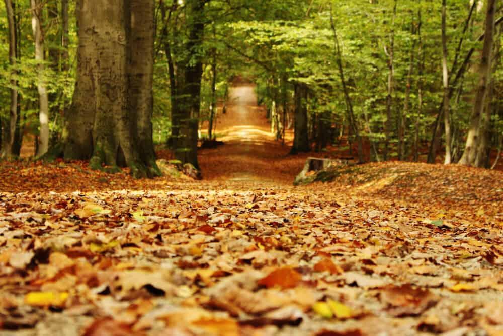 Sonian Forest Belgium