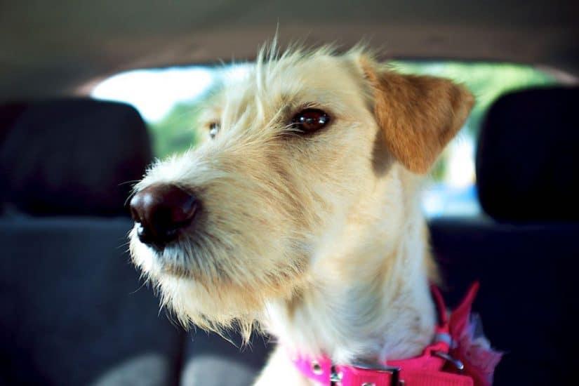 Preparing for my dog-friendly road trip