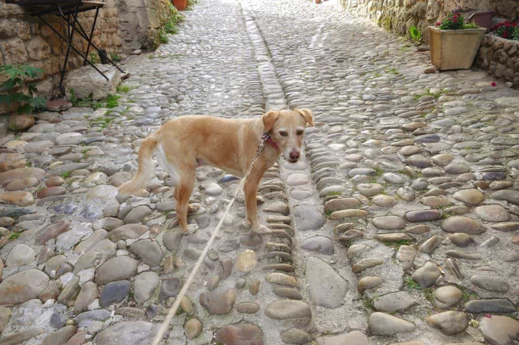 How to travel to Europe with a dog - a complete guide! Global Grasshopper
