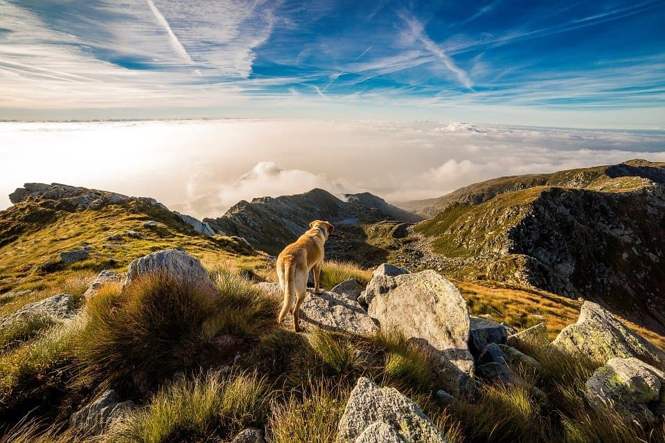 12 of the best dog-friendly travel destinations in Europe