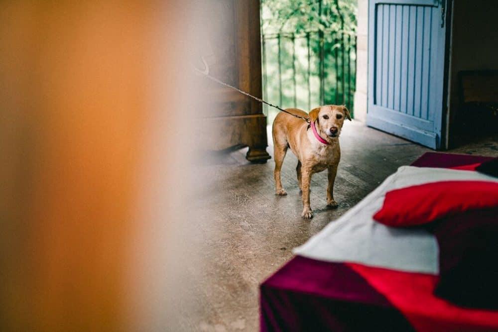 Dog friendly tour France
