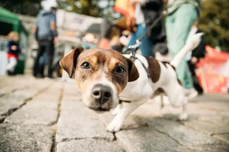 Dog friendly hotels in San Francisco