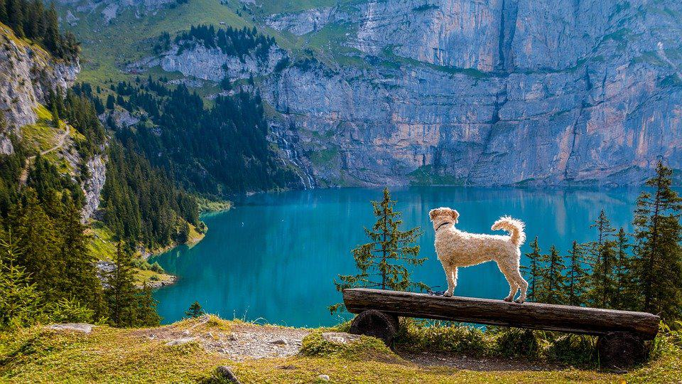 10 of the best dog-friendly travel destinations in Europe Global Grasshopper
