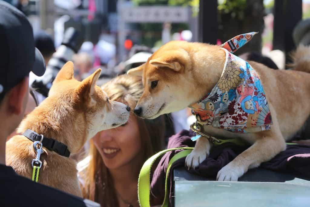 best dog friendly hotels in San Francisco