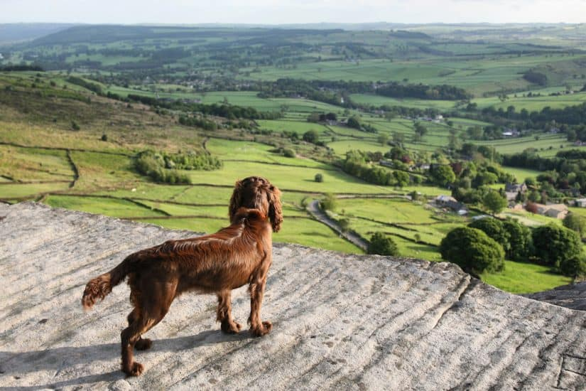best dog friendly hotels in the Peak District