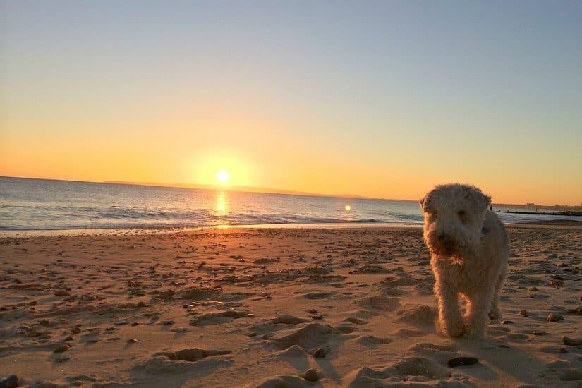 Dog friendly hotels in Dorset