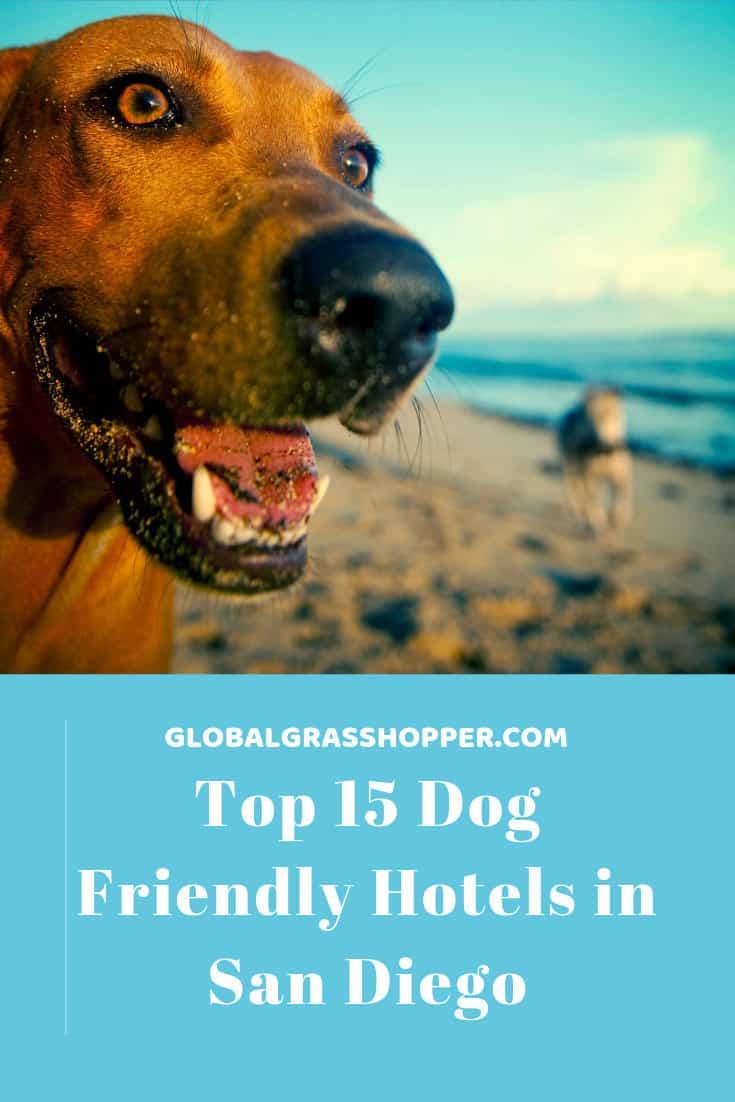 Dog Friendly Hotels in San Diego