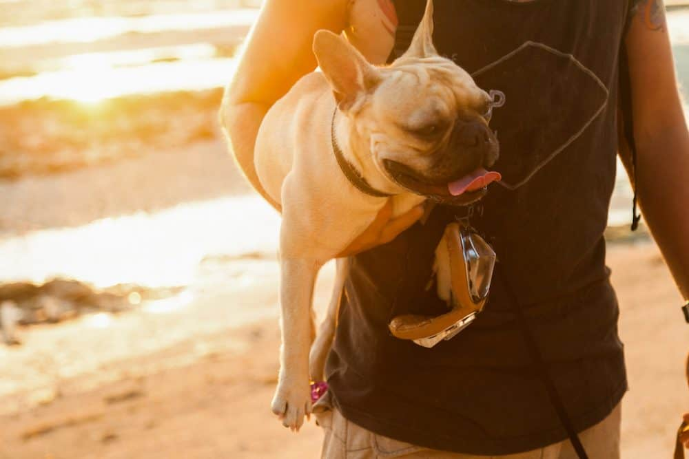 Top 15 dog friendly hotels in Cornwall